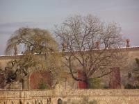 La Màgia innevata - fotografia della Limonaia di levante (279.35 KB)